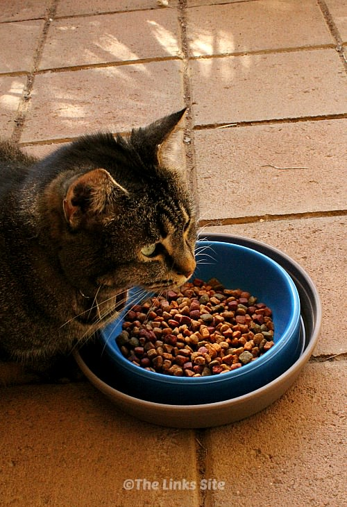Tabby cat sitting eating dry food from a bowl. The cat food bowl is inside a larger dish of water which forms a moat around the cat food bowl.